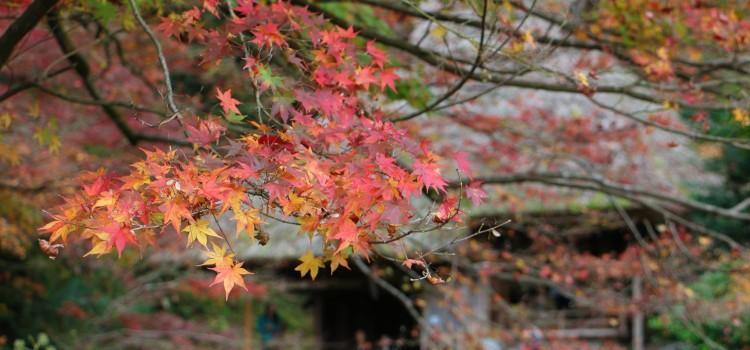 【11/16~11/22】facebookで振り返る、先週の安芸太田町はこんな感じでした。